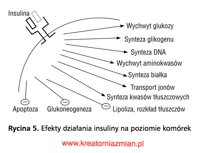 hipeinsulinemia insulinooporność